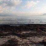 Playa Cap des Bou en Alcúdia