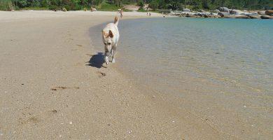Playa Con do Corvo en O Grove