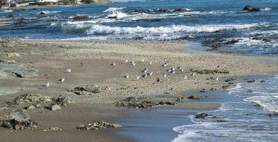 Playa El Chaparral en Mijas