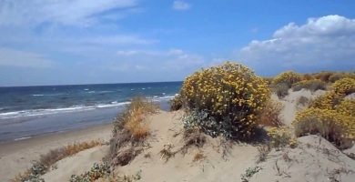 Playa La Adelfa en Marbella