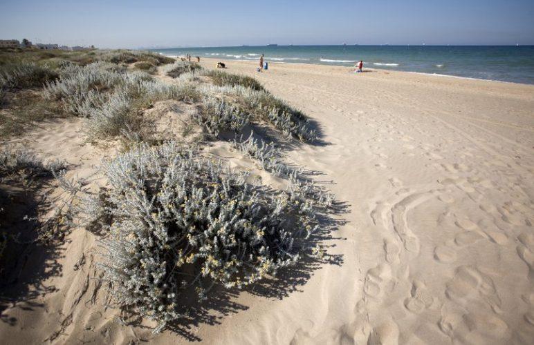 Playa L'Arbre del Gos en Valencia