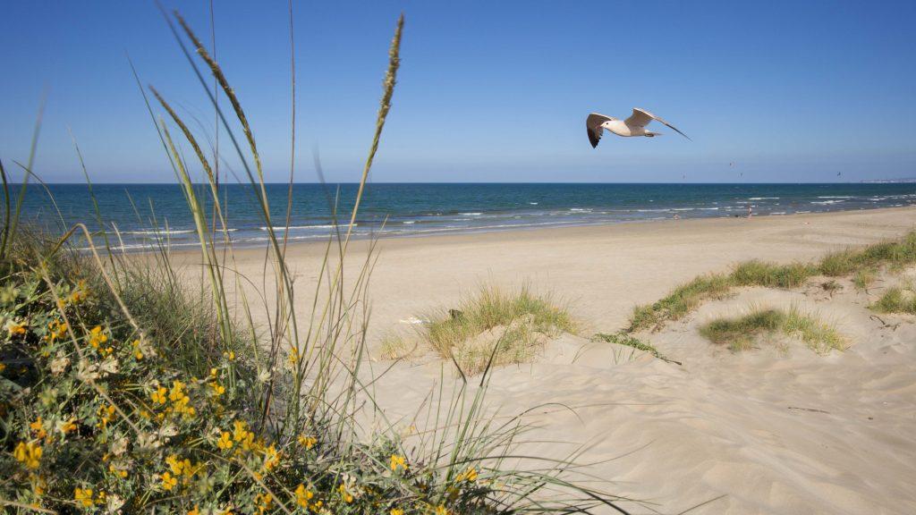 Playa Los Verilitos en La Oliva