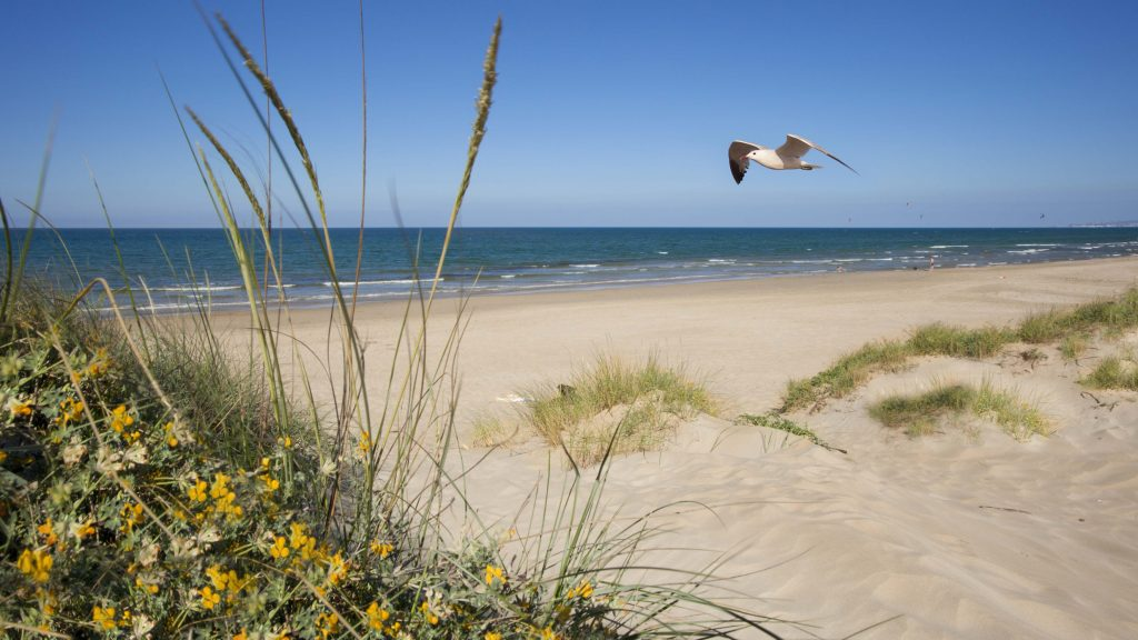 Playa Playa de los mallorquines en La Oliva