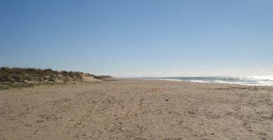 Playa Playa Mangueta en Vejer de la Frontera