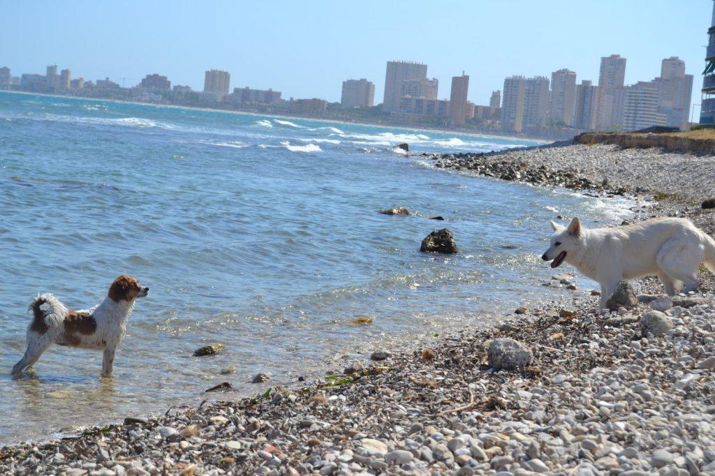 Playa Punta del Riu en Vandellòs i l'Hospitalet de l'Infant